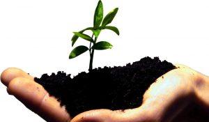 startup-grow