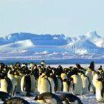 Gramener: AI per salvare i pinguini dell'Antartide dall'estinzione
