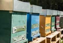 3Bee, la startup al fianco degli apicoltori italiani
