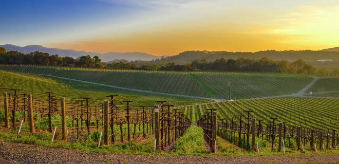 Tracciabilità del vino: IBM e eProvenance lanciano VinAssure, blockchain per sicurezza ed efficienza