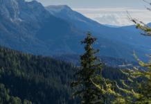 Foreste della Val di Fiemme