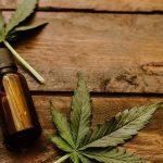 Il ruolo dell'IA nell'industria della cannabis in continua crescita