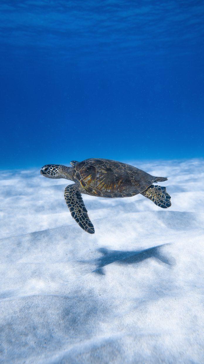 Hikvision regala 10 telecamere per le tartarughe marine