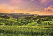 CAI, Consorzi Agrari d'Italia