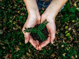Sostenibilità, sempre più interesse per ESG e Carbon Footprint