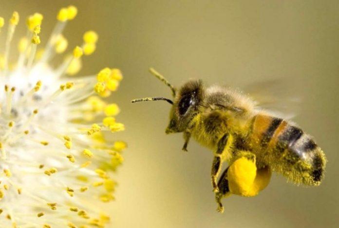 Le api e la tecnologia effettuano il bio-monitoraggio a Milano